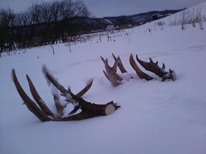 To a Shed Hunting Ethic