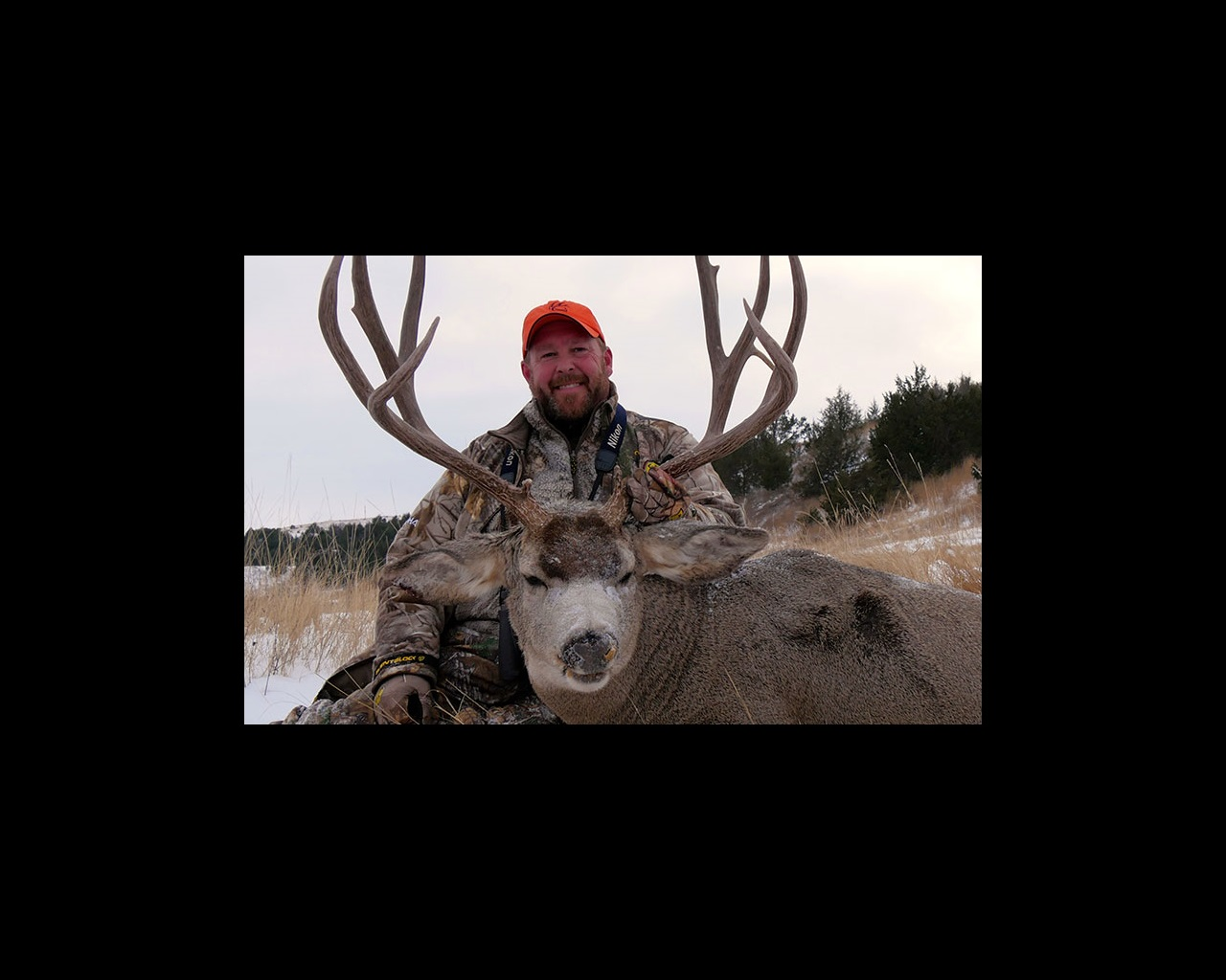 Open Ground Mulies – An American Legend