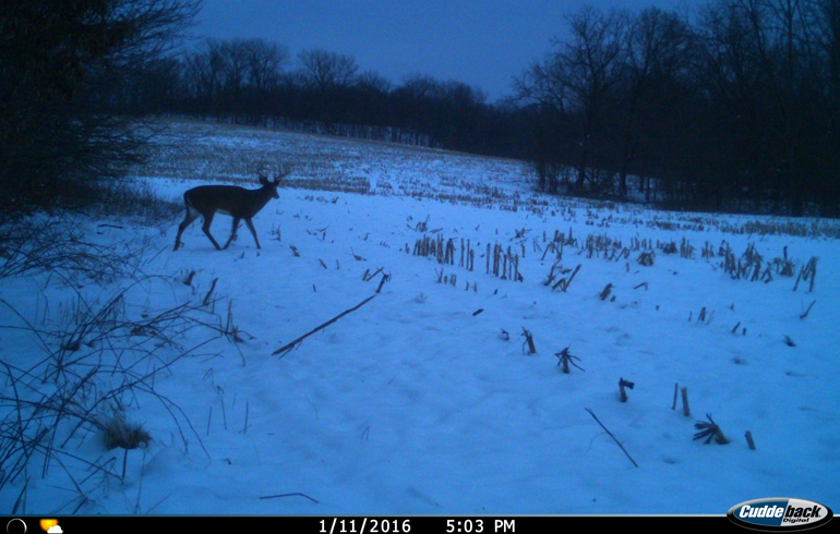 Tips To Monitor And Improve Your Deer Herd In The Late Season