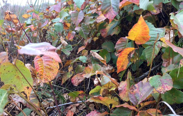 Poison Ivy Prevention – Avoid the Scratch Scratch