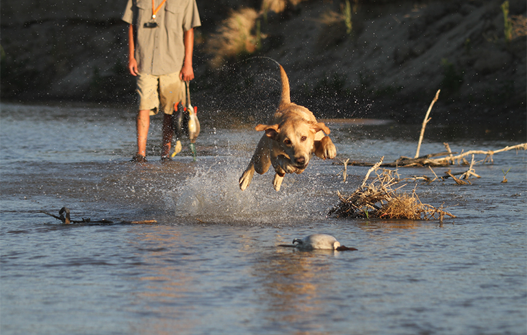 Tips to Prepare Your Dog for a Long Waterfowl Season