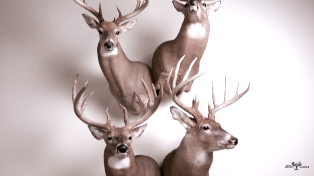 How to Not Run out of Space for Taxidermy