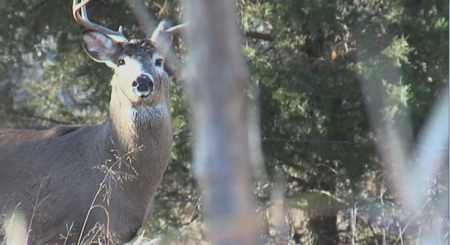 Husker State Buck Hunting