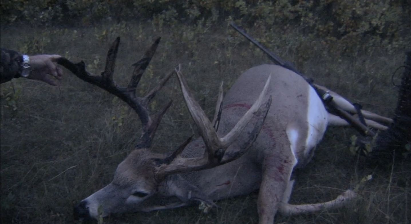 Texas Whitetail