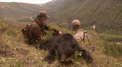 British Columbia Black Bear