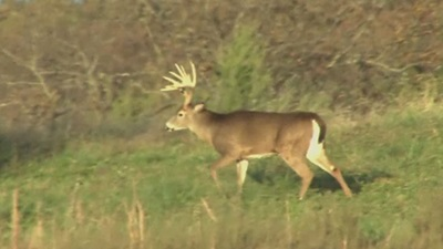 Missouri Whitetail