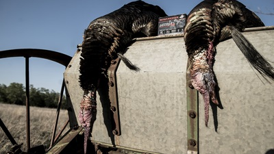 Paul Sawyer Tags Two Huge Gobblers in Midwest